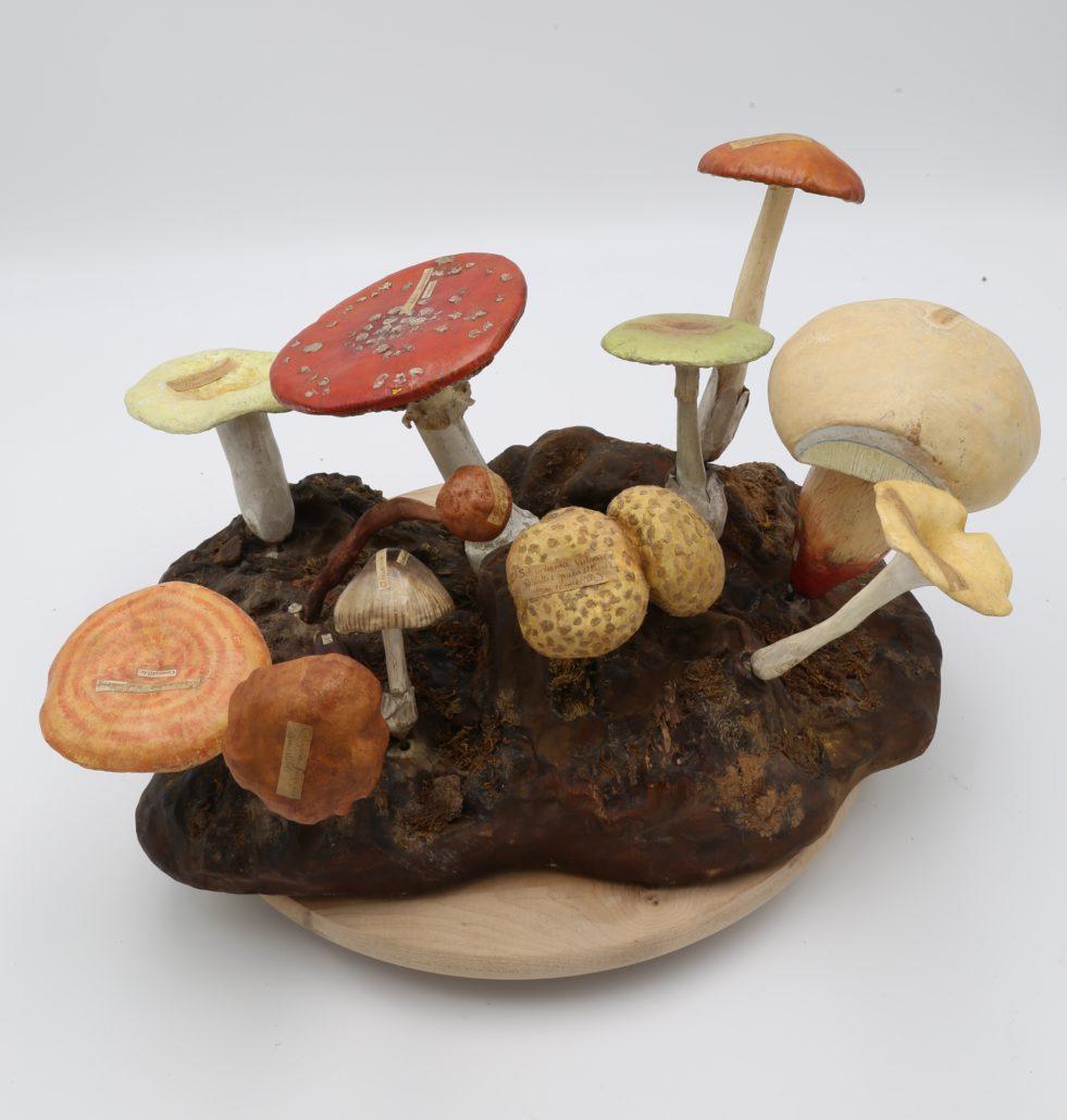 Modèle petite forêt de champignons de Louis Auzoux
