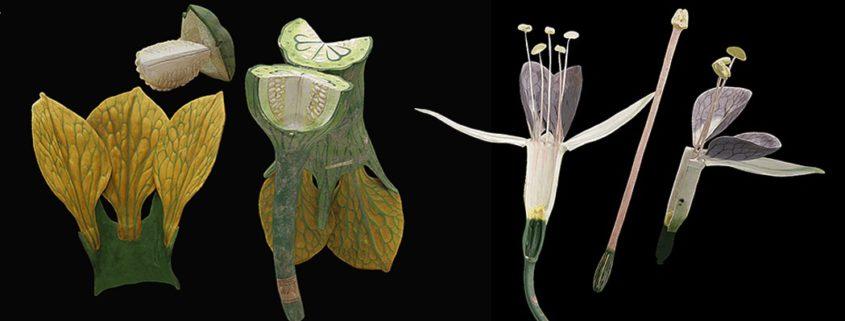 grace au scanner Breuckmann et à la numérisation et de scan 3D, on peut découvrir les modèles de plantes de Louis Auzoux telles qu'il les a concues et imaginées