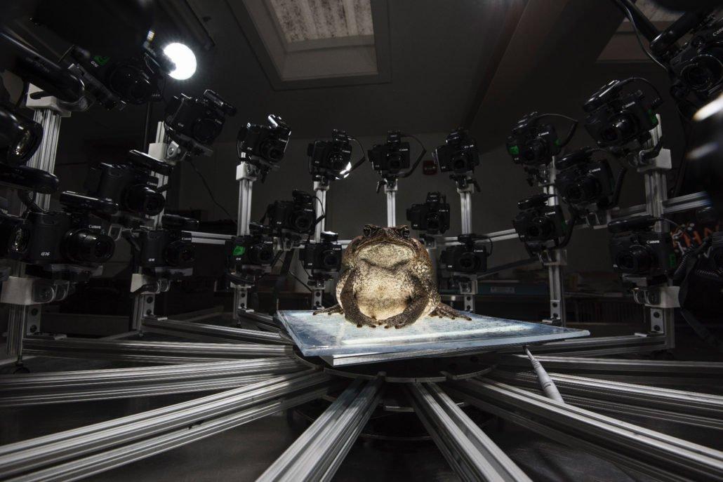 une grenouille se fait scanner dans un studio 3D